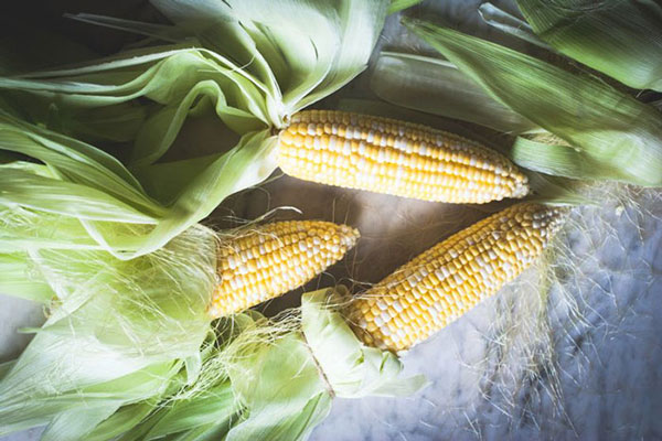 Feed Corn