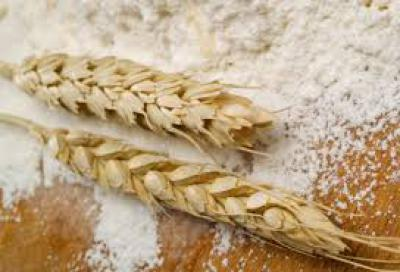 In 2 years, Kyrgyzstan plans to achieve full self-sufficiency in wheat