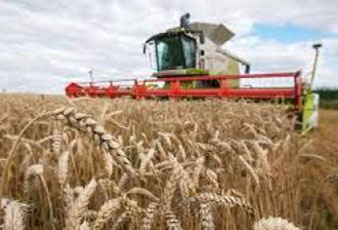 USA: harvesting winter wheat is 2 times faster than a year ago